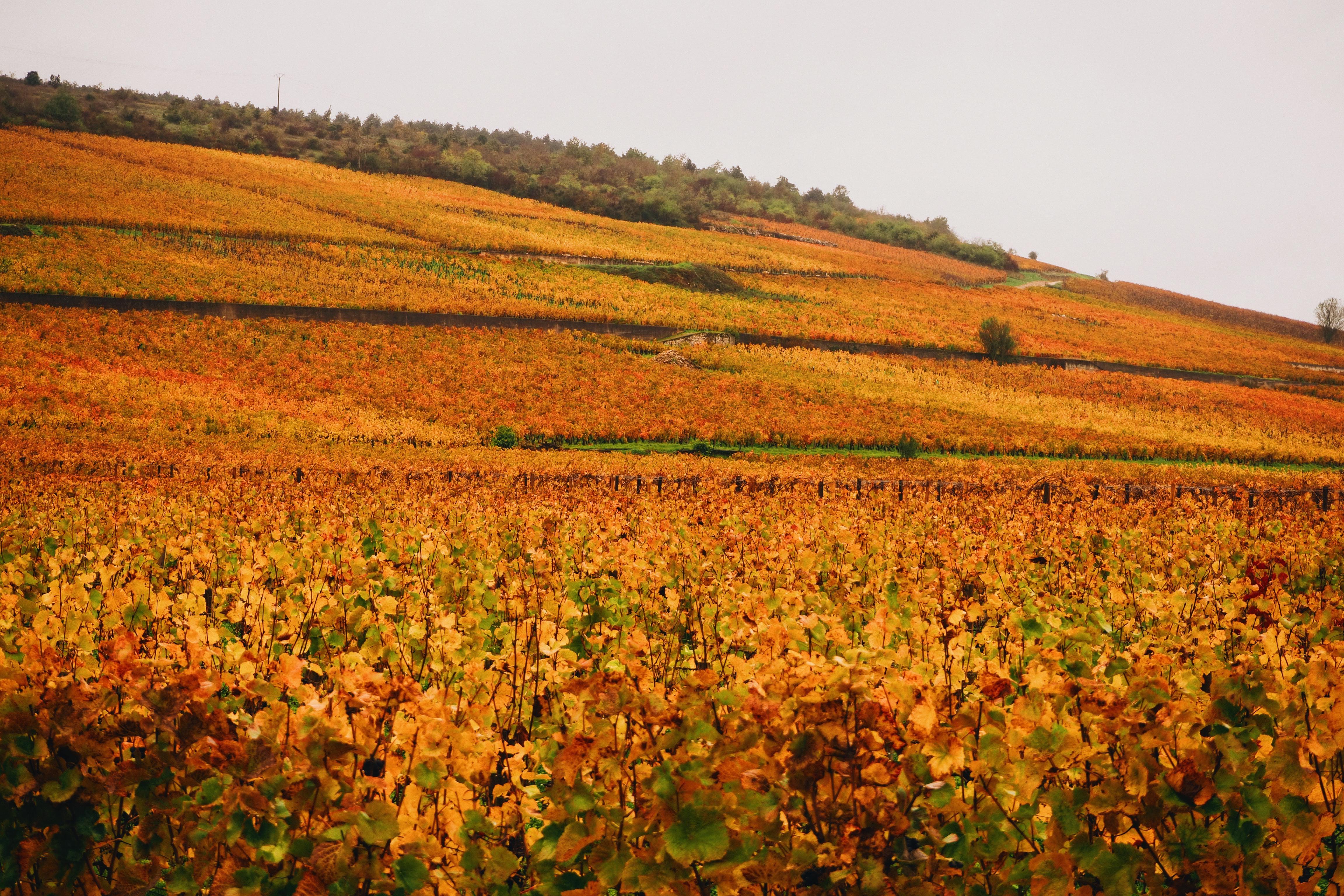 bourgogne, week-end bourguignon, excapade bourguignonne, route des vins, vignes, automne