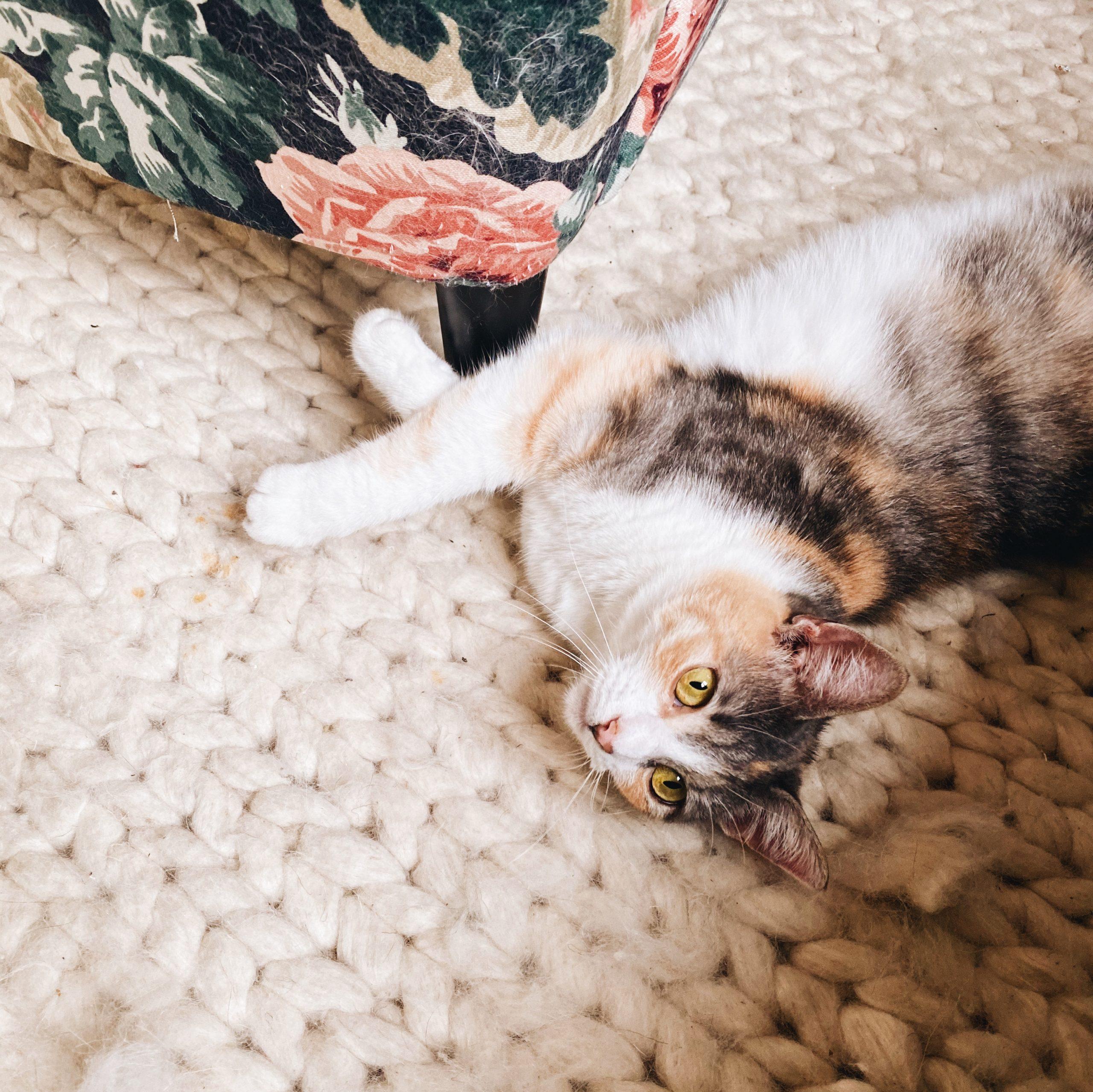 mon déconfinement, chat confiné, confinement 2020, coronavirus, covid 19, confinement
